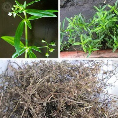 Máy sấy bạch hoa nhiệt thảo
