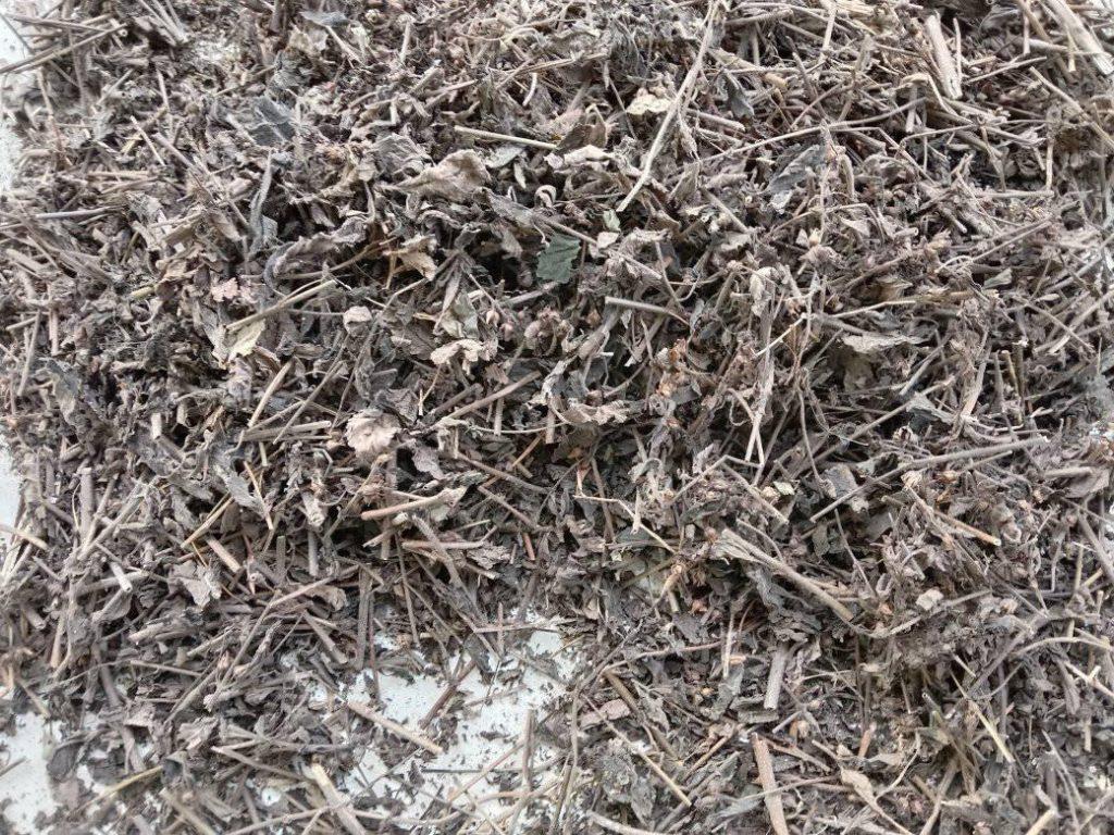 Hình ảnh cây nhân trần sấy khô