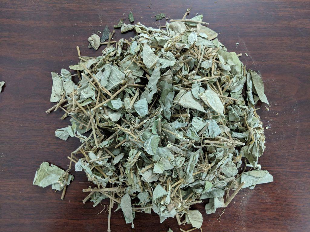 Hình ảnh lá kim tiền thảo sấy khô